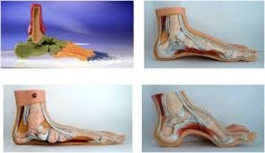 Ayak Deformiteleri